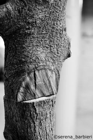 albero 1 C