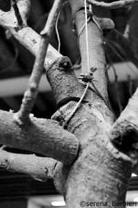 albero 2 C