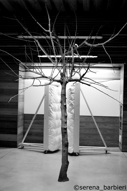 albero 3 C