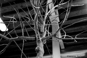 albero 5 C